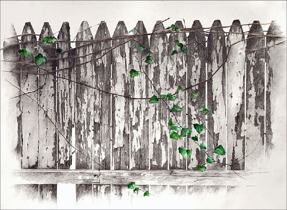 Good Neighbors by Carroll Jones III--weathered picket fence with green ivy growing along it.