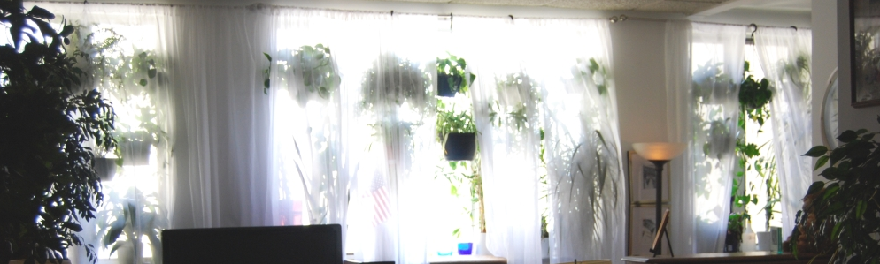 A huge window filled with light and plants, the artist's studio in Jersey City, NJ